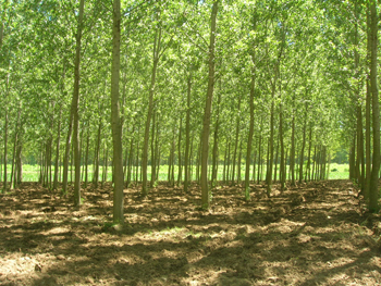 sito ufficiale della regione piemonte settore foreste
